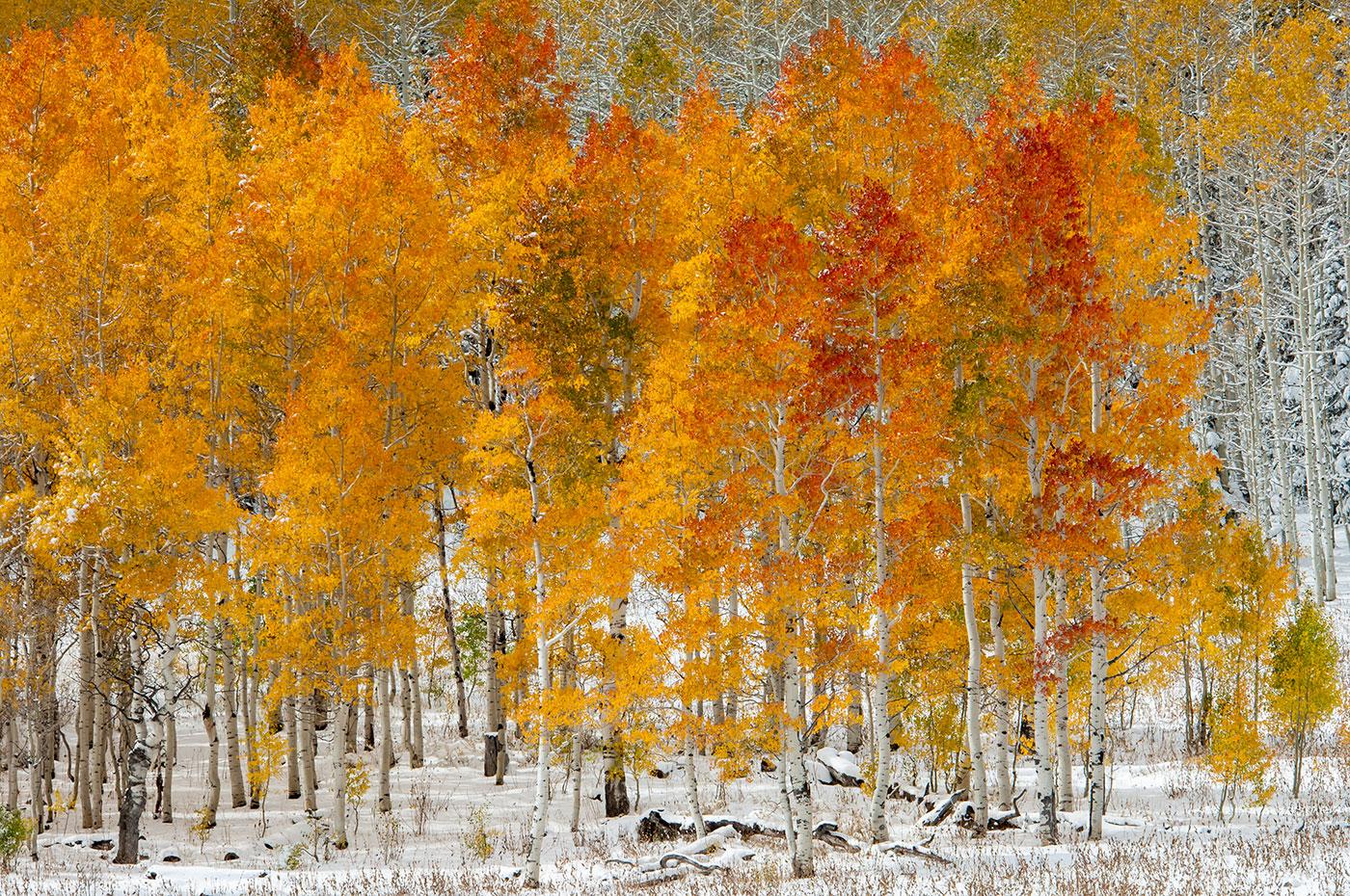 Autumn in the Uinta Mountains of UT - Image #3-5531