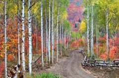 Fall in the Wasatch Mountains, Utah - Image #3-5616