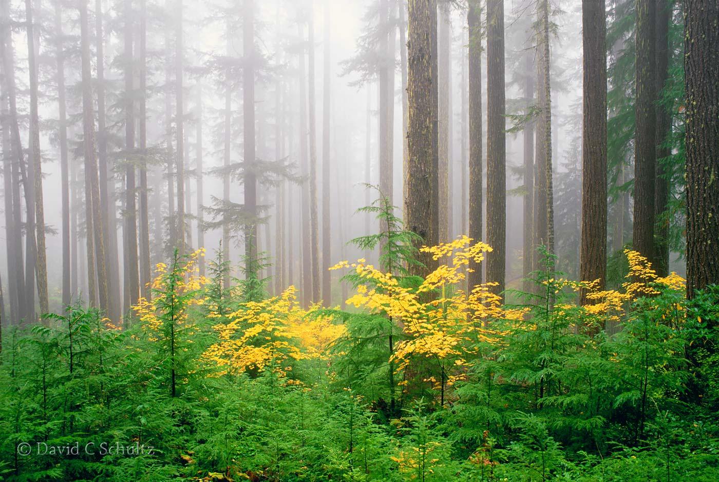 Umpqua National Forest in the fall, Oregon - Image #3-2097