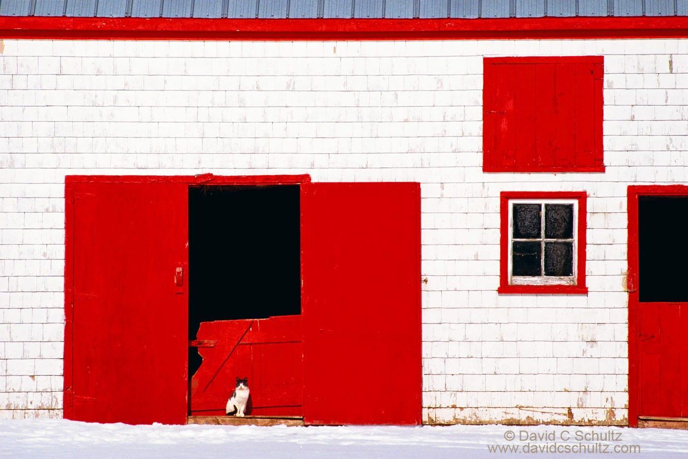Cat on Prince Edward Island Canada - Image #13-313