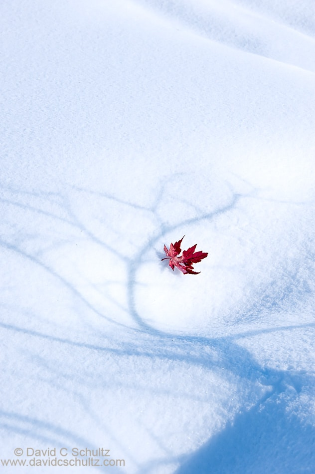 Red maple leaf in the snow - Image #191-1096