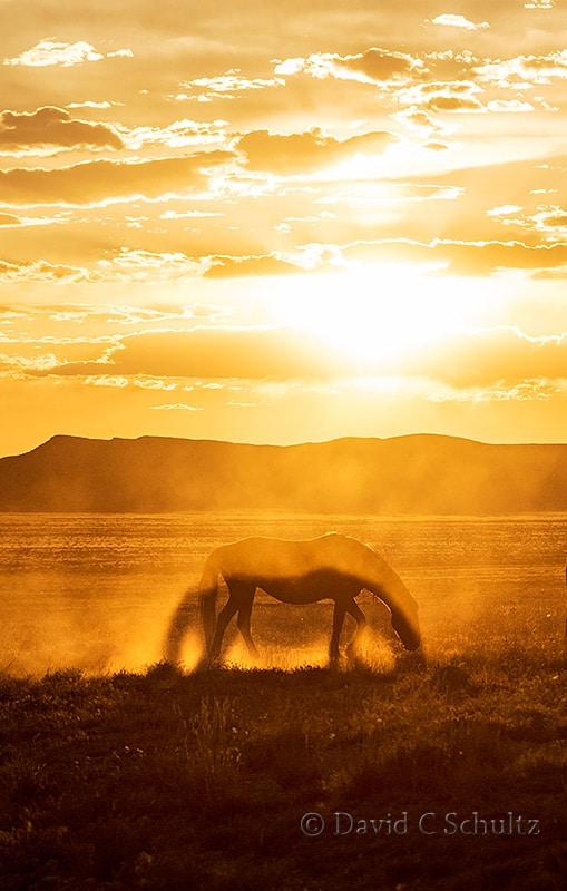 Wild horses at sunset- Image #47-2352