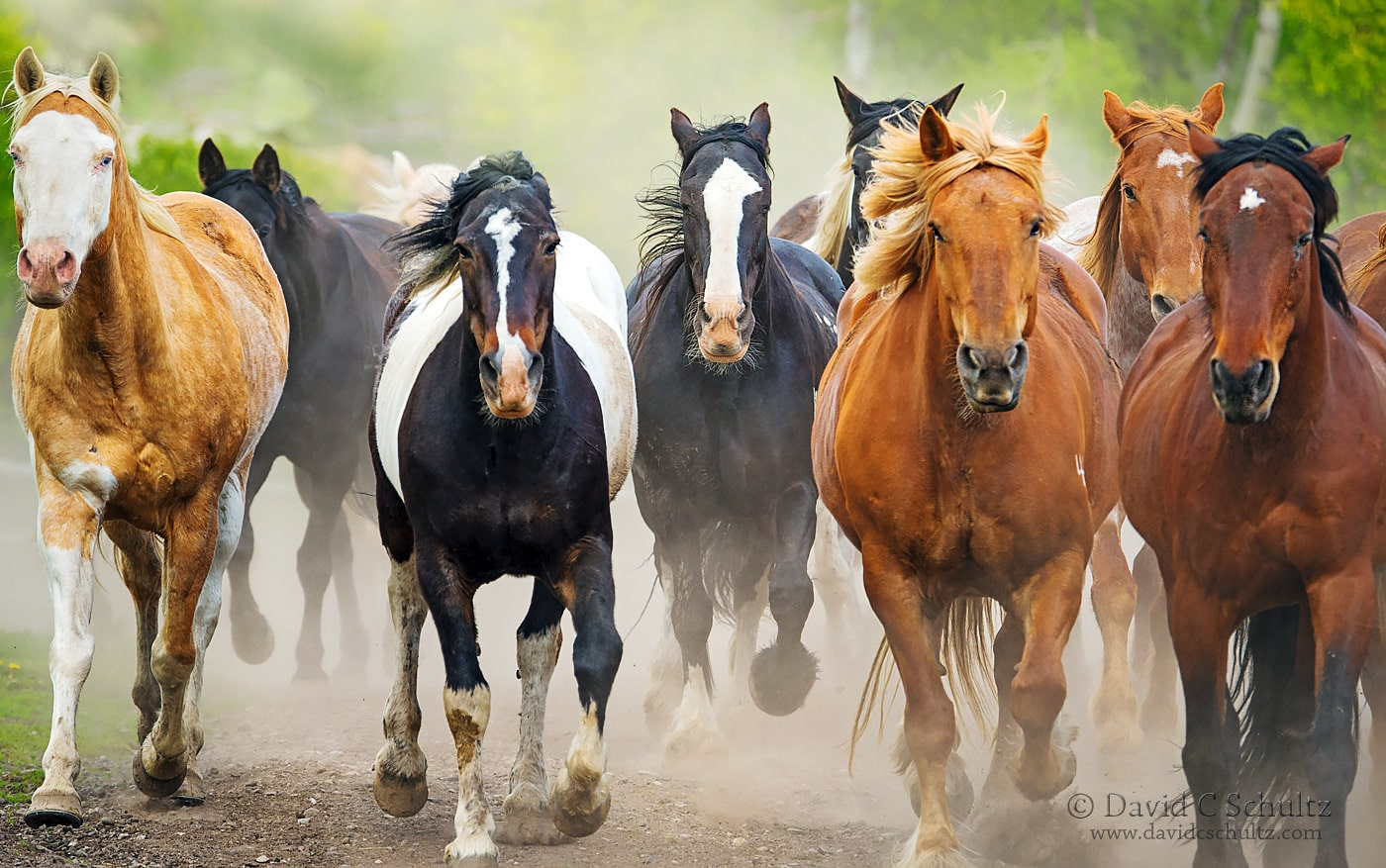 Horse round-up in Wyoming - Image # 47-1661