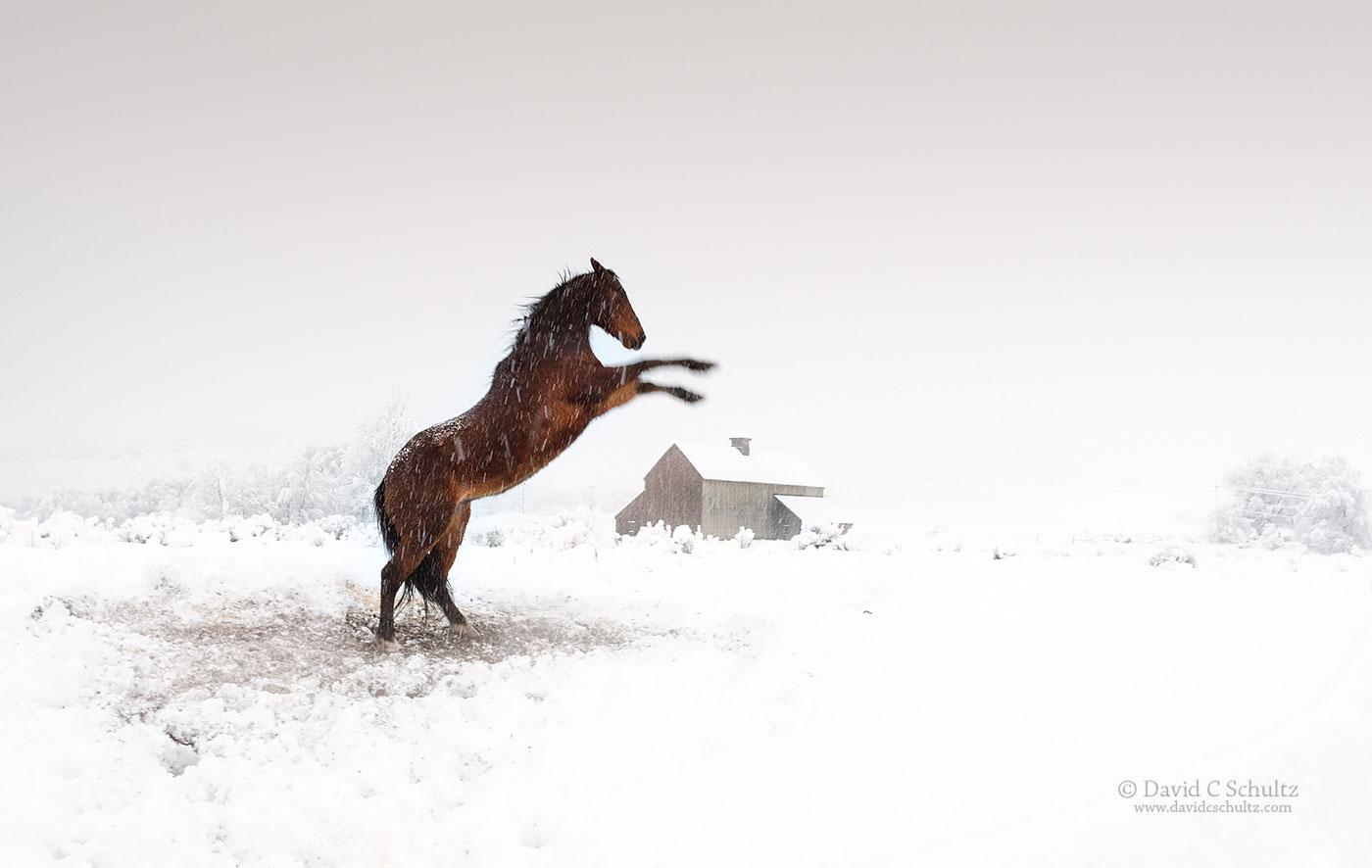 Horse and the Tate Barn Utah - Image #47-3154