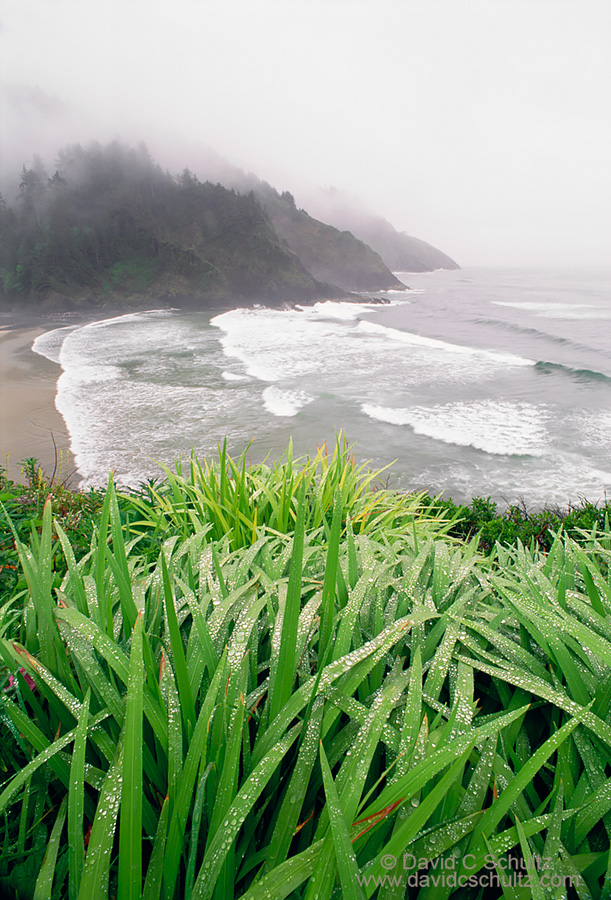 Heceta Head, OR - Image #136-376