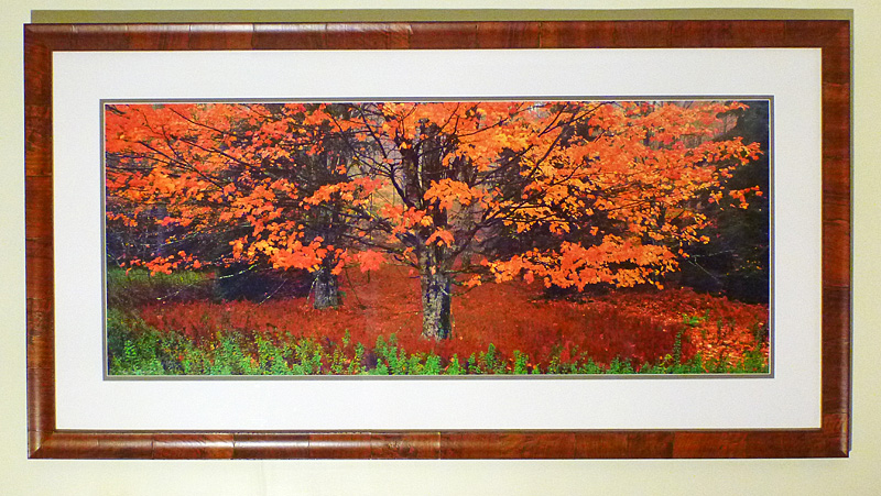 "#15 Maple Tree, West Virginia, 63x33"" with frame"