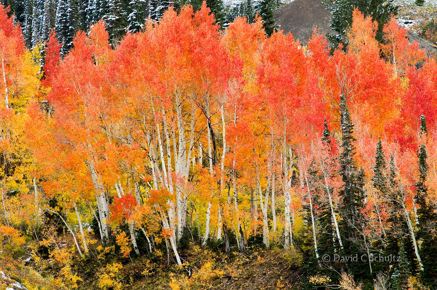 fall-aspen-wasatch-mountains-utah-3-5251