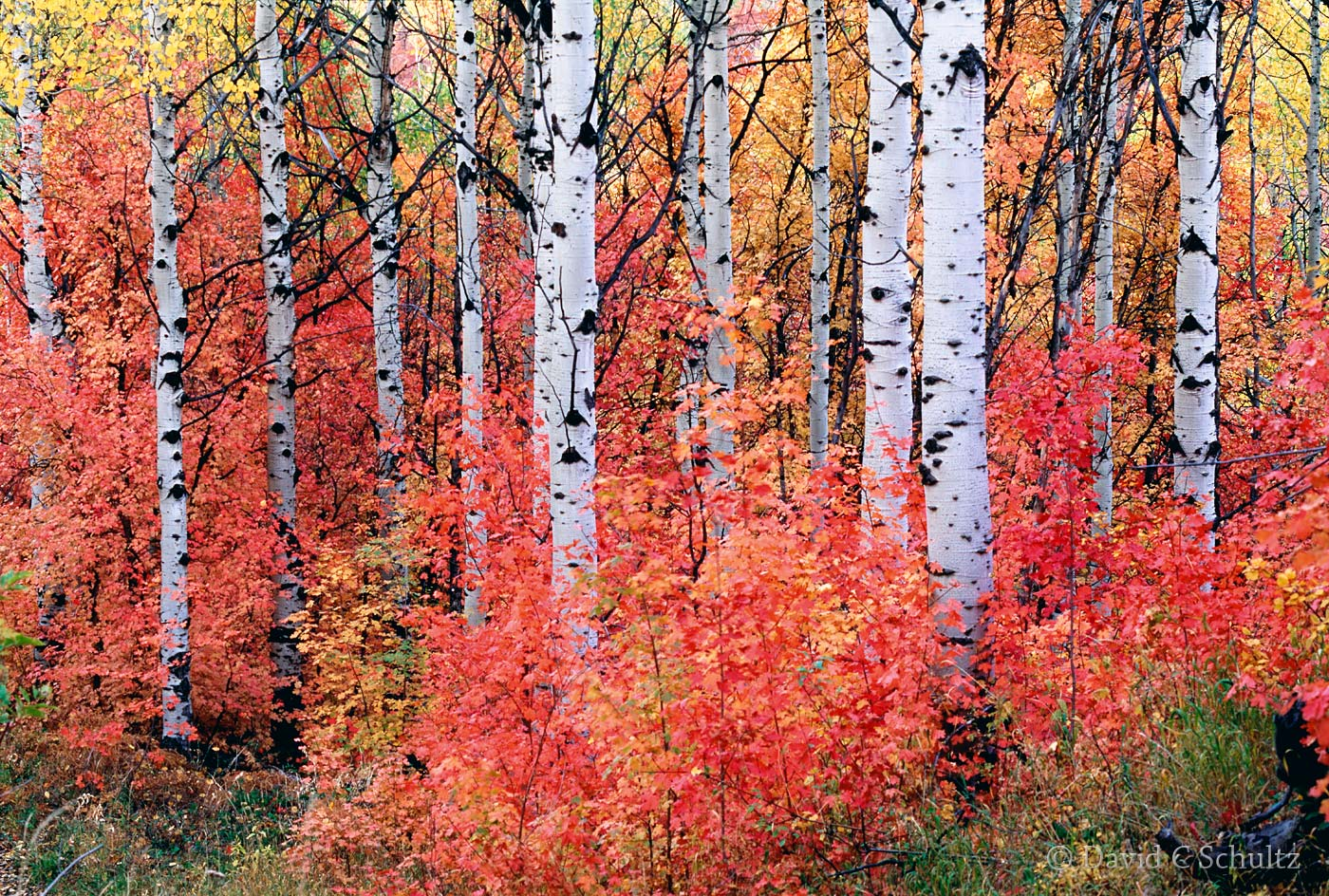 Fall colors in the Wasatch Mountains, Utah - Image #3-906