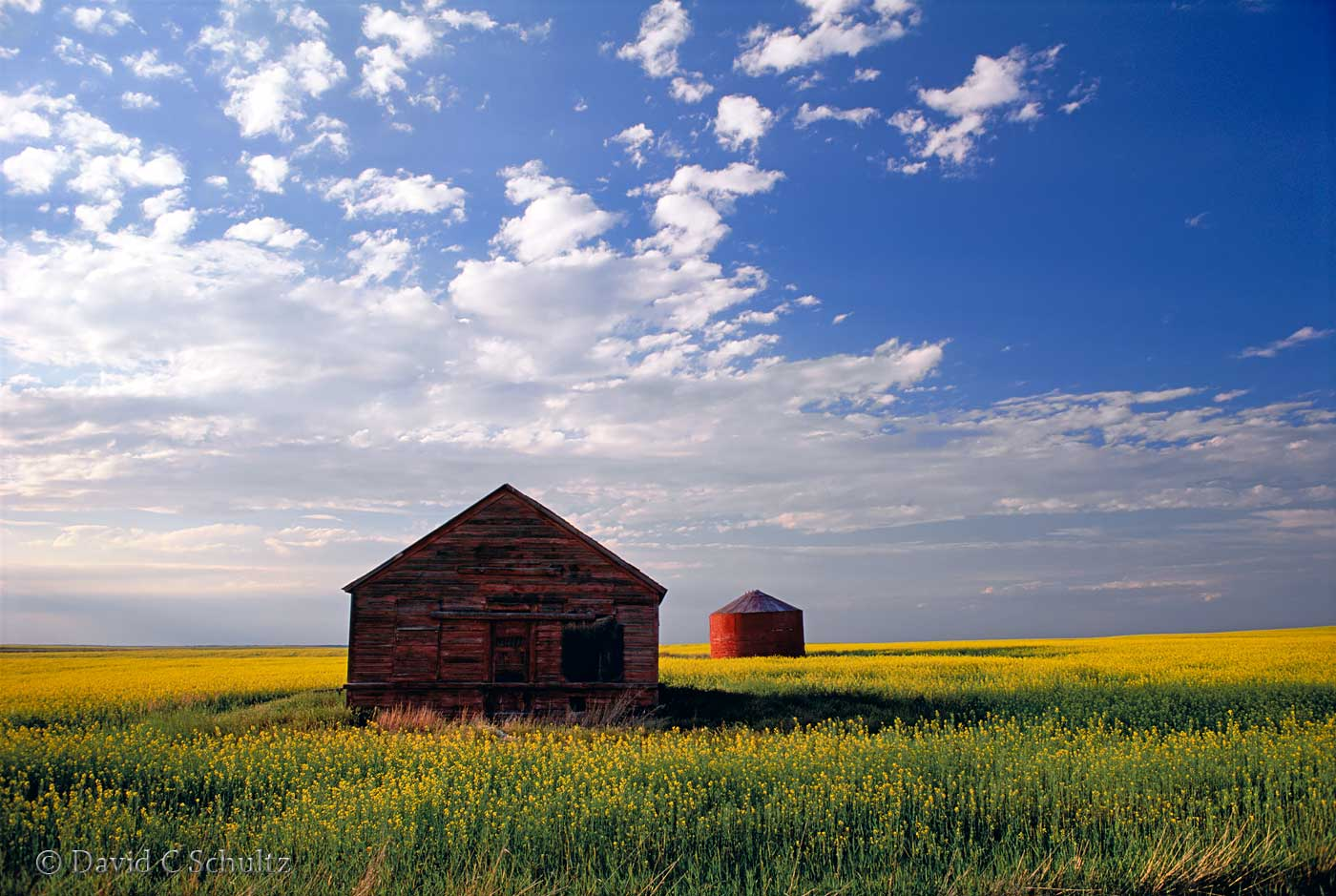 cCanola field in bloom in Alberta, Canada - Image #7-1245