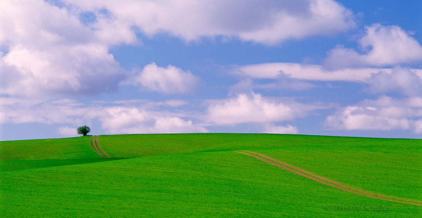 Spring time in the Palouse Country, WA - Image #7-1426