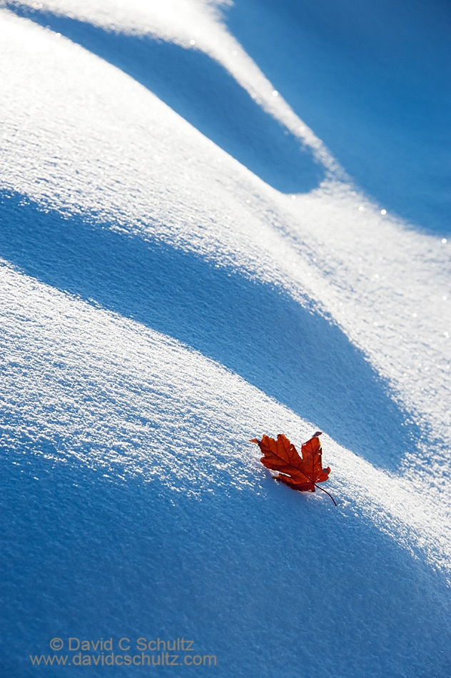 Red maple leaf in the snow - Image #191-1008