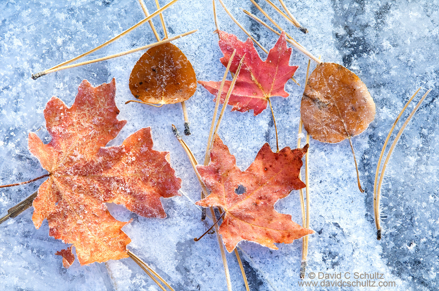 Maple and aspen leaves on frozen stream - Image #3-7026