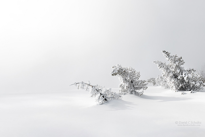 winter-yellowstone-106-5719