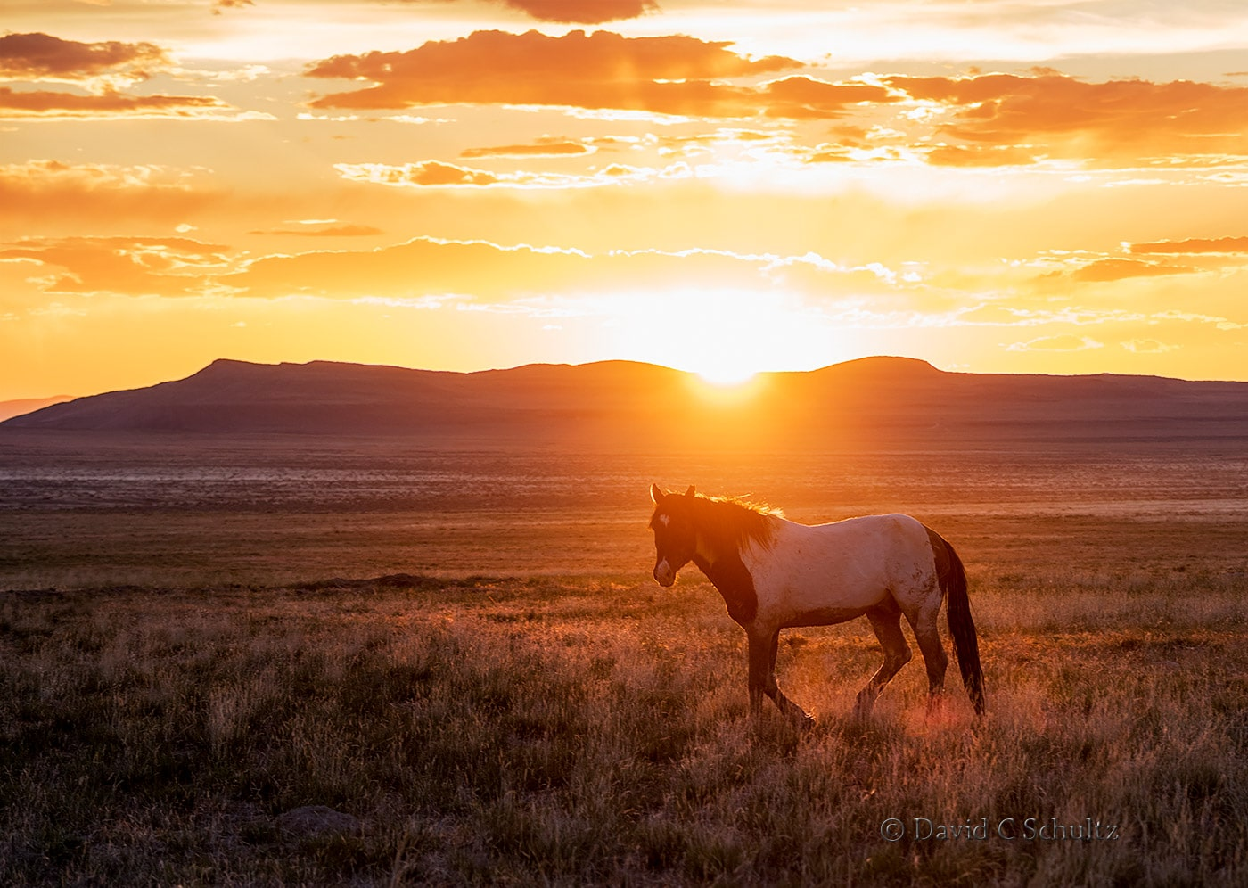 Wild horses at sunset- Image #47-2442