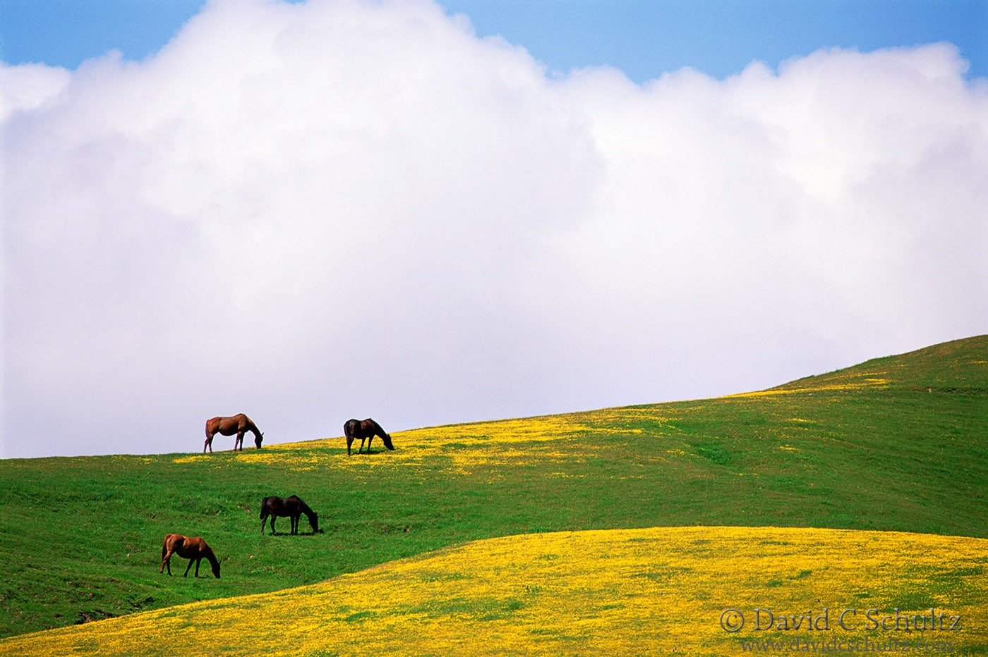 Horses in northern California- Image #47-565
