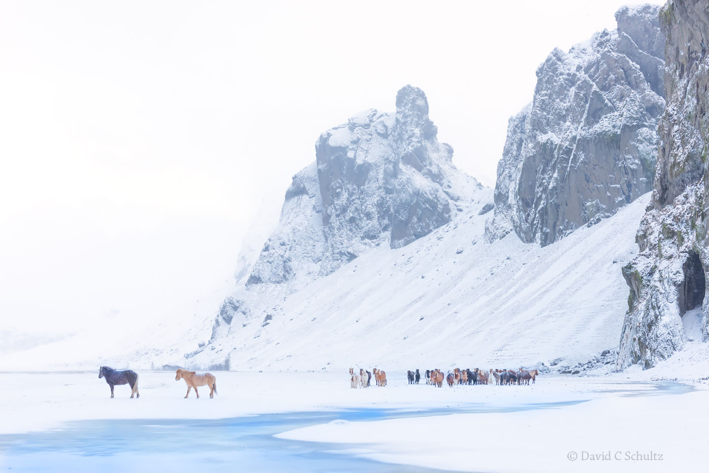 Winter and Icelandic Horses - Image #47-2843