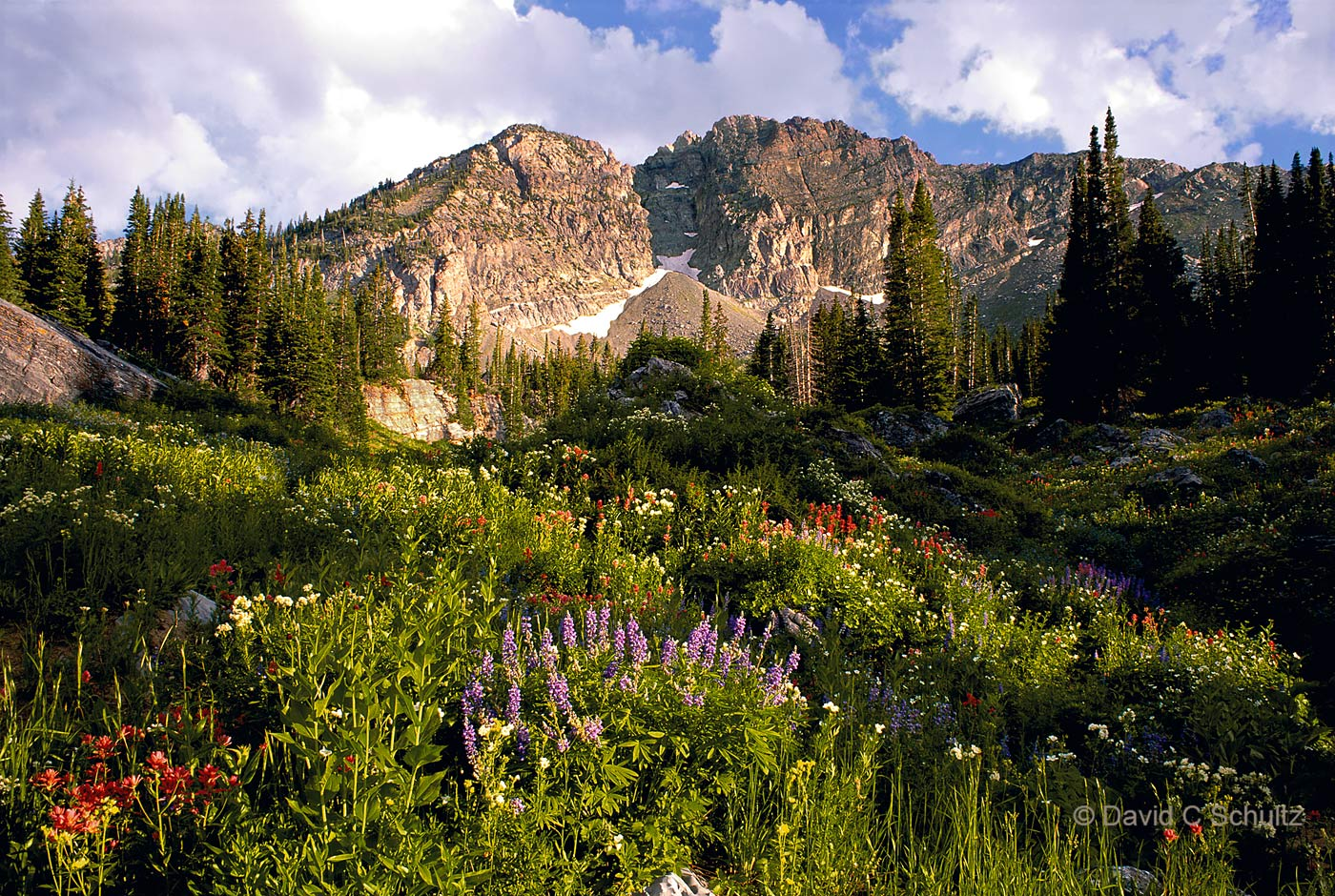 Albion Basin, Wasatch Mountains, UT - Image #68-3197
