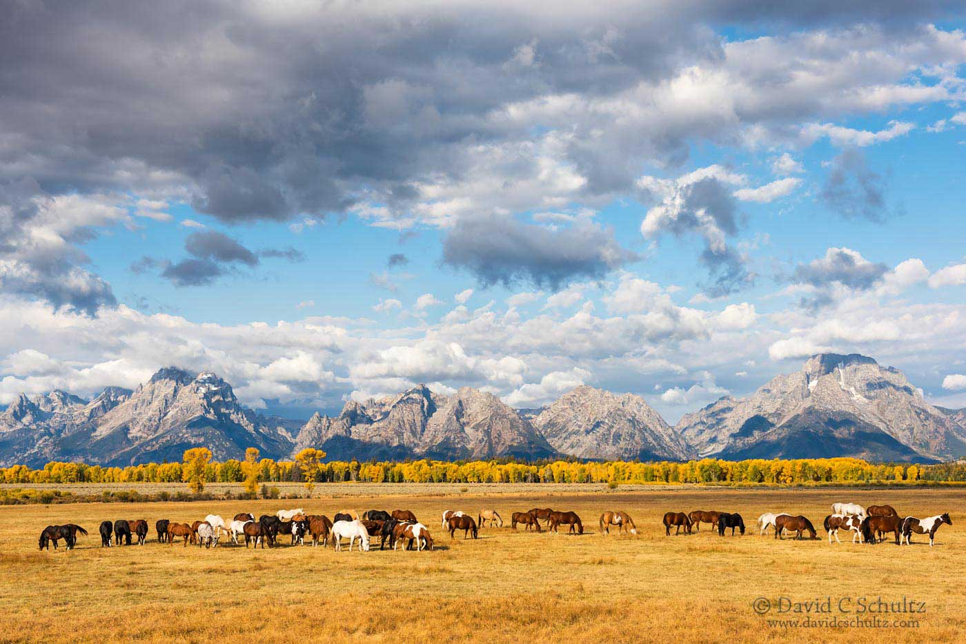 Horses and Grand Teton National Park - Image #44-4583