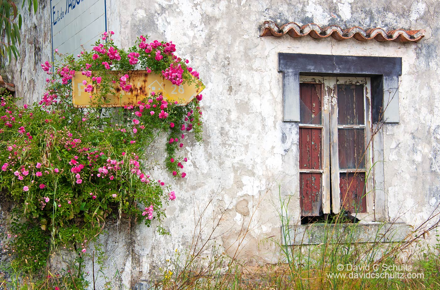 Portugal - Image #203-668
