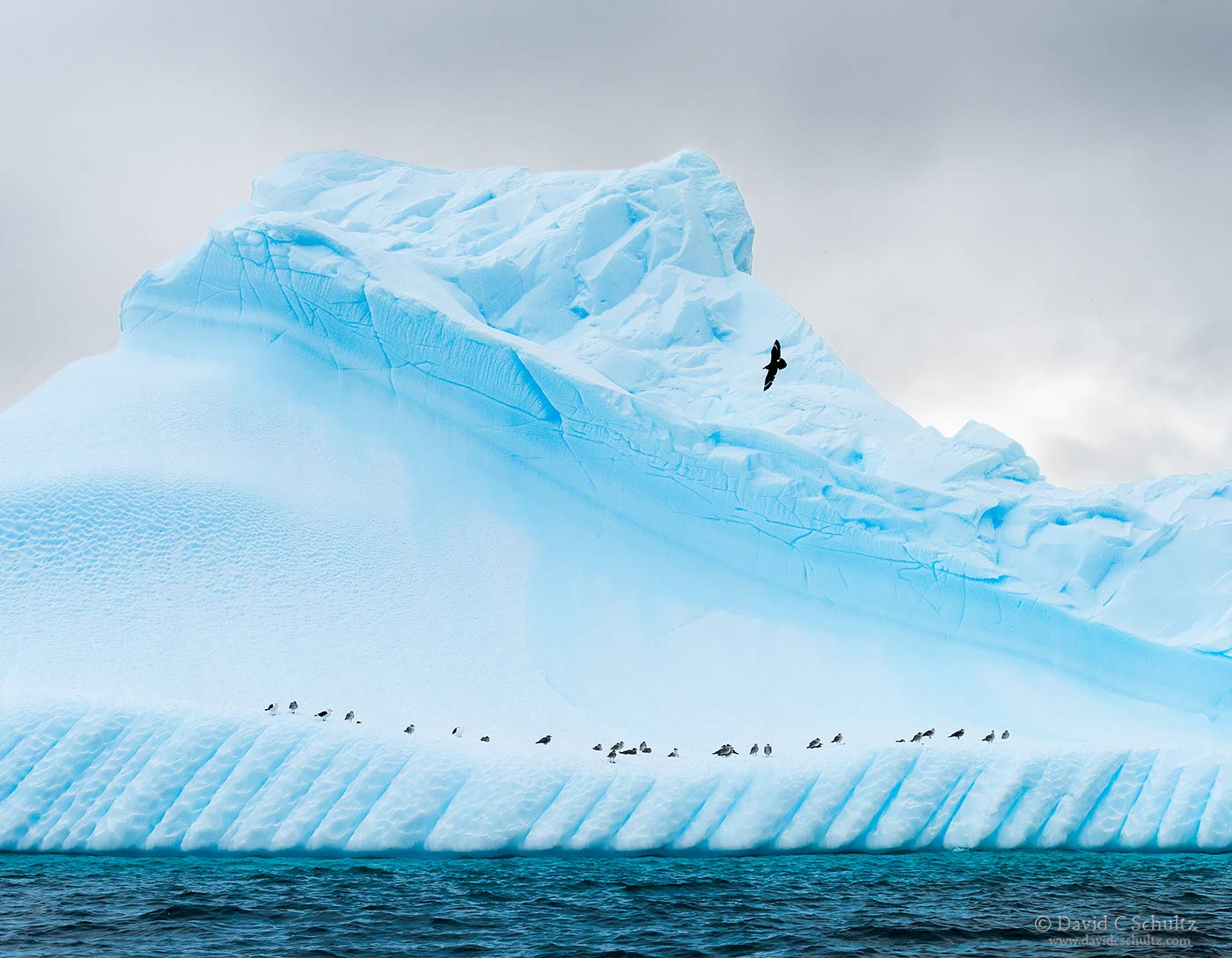 Iceberg and birds in Antarctica - Image #167-5209