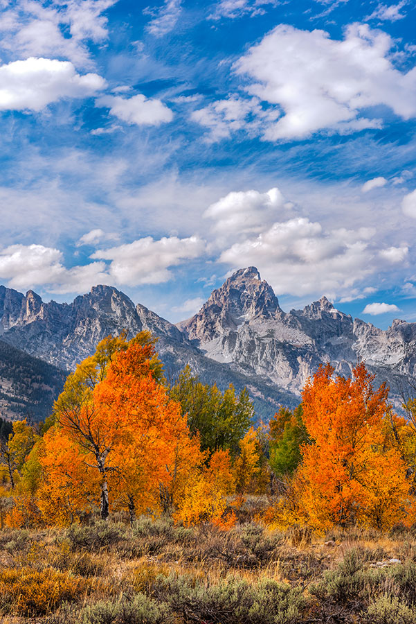 Autumn-Grand Teton National Park, WY- Image #44-4808