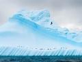 Iceberg and birds in Antarctica - Image #167-5209