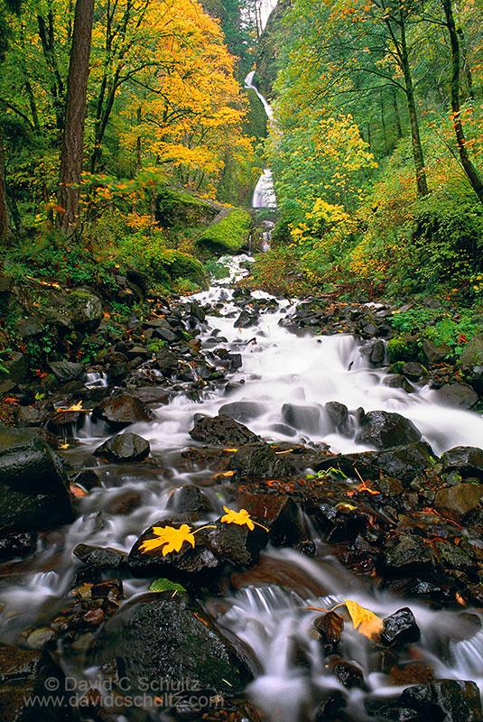 Wahkeena Falls, OR - Image #104-1474