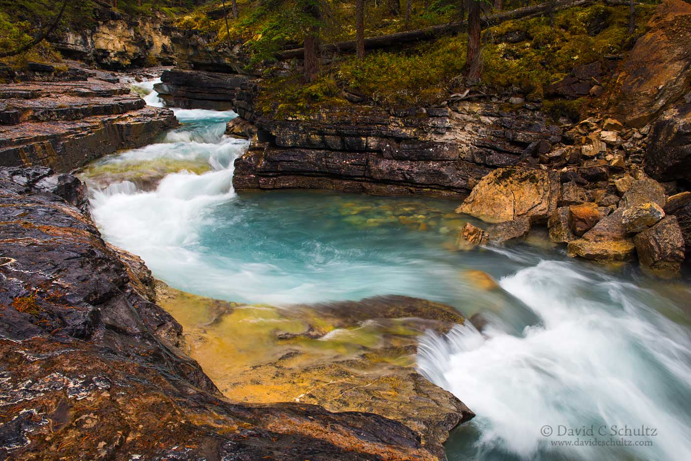 Beauty Creek, Jasper National Park - Image #125-783