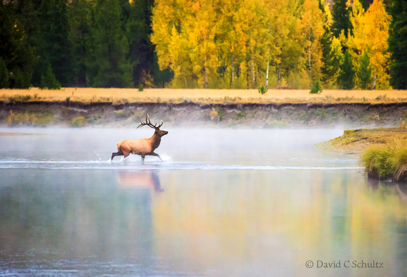 Bull elk in Grand Teton National Park- Image #161-2768