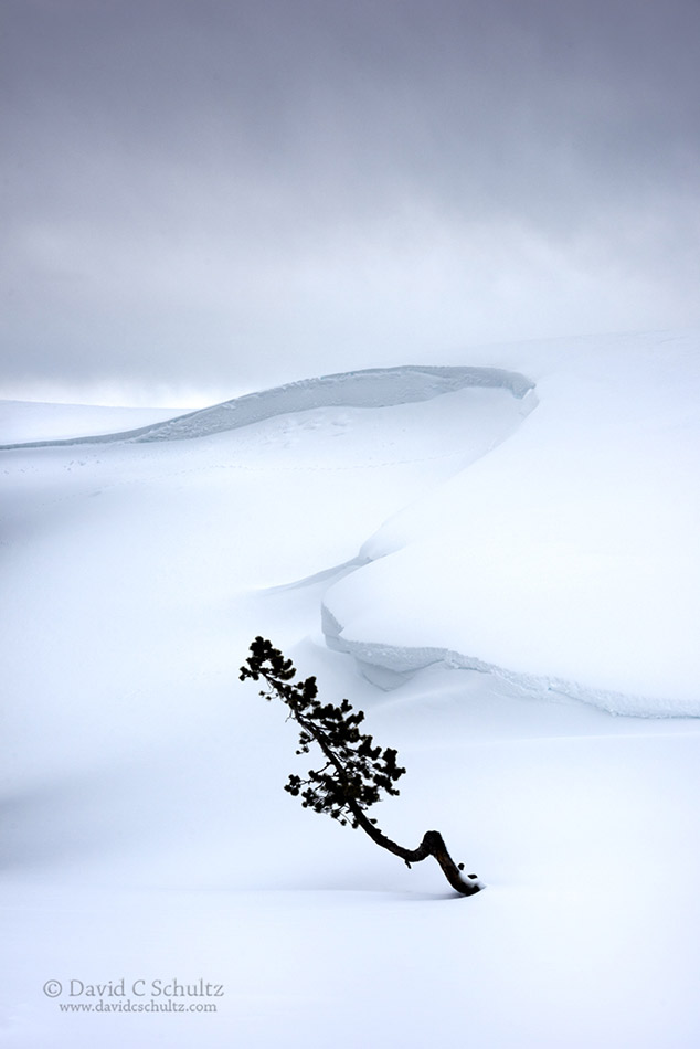 yellowstone-hayden-valley-winter-106-3162