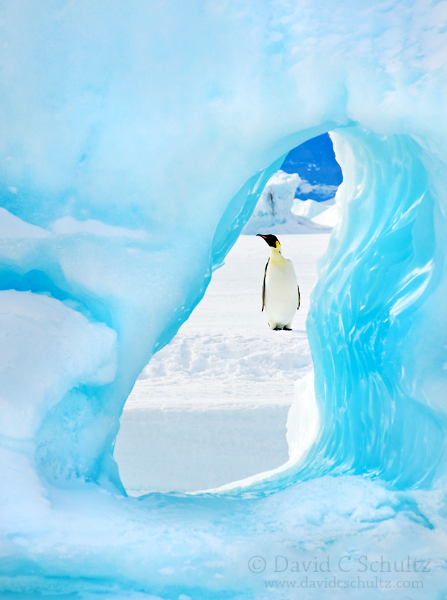 Emperor penguin framed by a hole in an iceberg near Snow Hill Island, Antarctica.