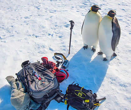 Antarctica camera gear list with emperor penguins