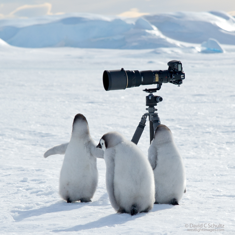 Photographing Penguins