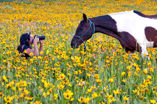 Wildflower photography lesson in the mountains of Utah.