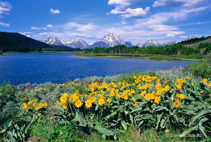 Spring in Teton National Park