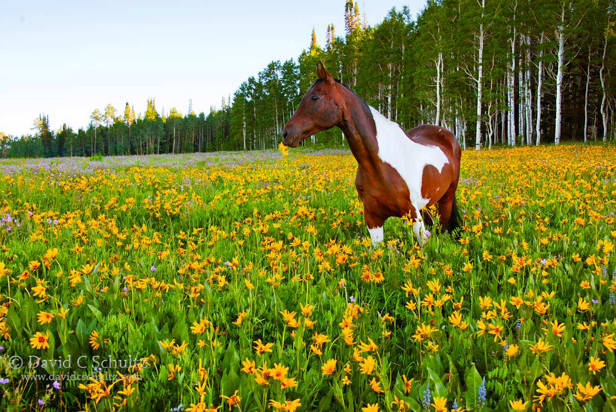 Horse in a field of wildflowers during a Park City Utah photography tour.