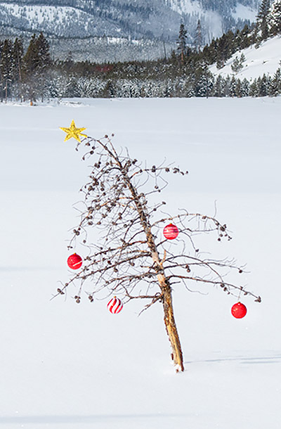 Christmas in Yellowstone Photography Tour