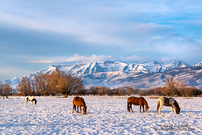 Ski Utah and take a break to photograph the beautiful Wasatch Mountains