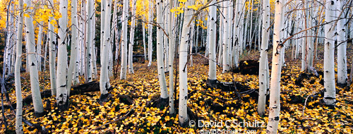 Autumn in Southern Utah Photography Tour with aspen trees on Boulder Mountain.