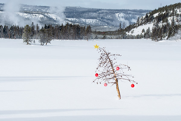 Christmas in Yellowstone National Park photo tour