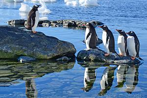Antarctic Peninsula photo tour gentoo penguins