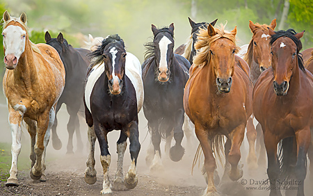 Grand Teton photo tour with horse round-up at the Heart Six Ranch