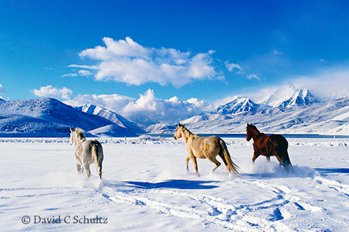 Park City photo tours includes the Heber Valley during the winter months.