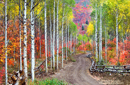 Park City fall photography tours and lessons.