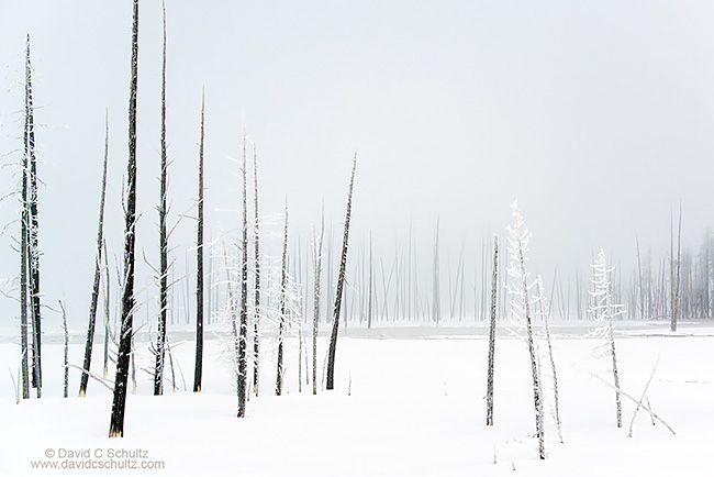 Silent dog forest in Yellowstone National Park
