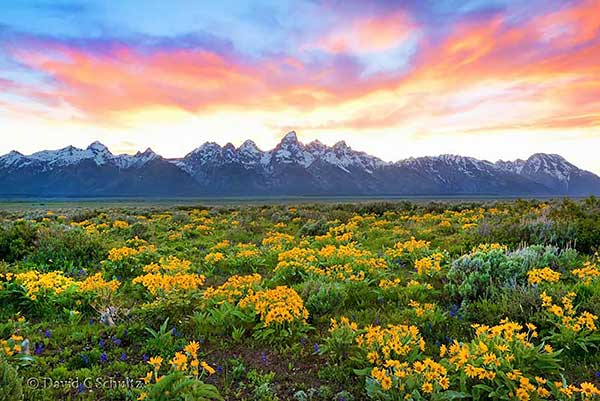 Spring Grand Teton National Park photography tour.