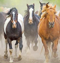 horse stamped in teton national park during photo workshop