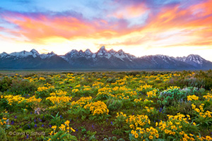 Grand Teton Spring Photo Tour with David C Schultz