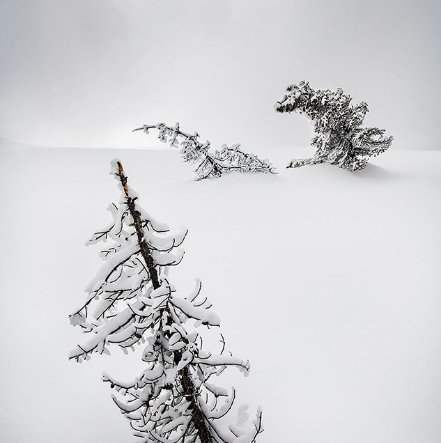 Frost coated trees in the Midway Geyser Basin or Yellowstone.