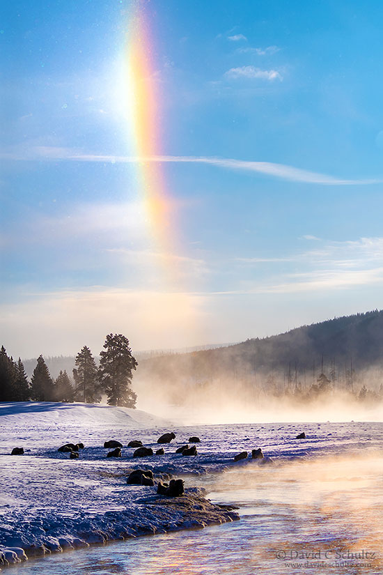 Sun dog and bison along the Madison River in Yellowstone National Park during the winter.